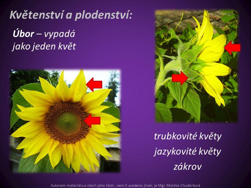 Květenství a plodenství: Úbor – vypadá jako jeden květ trubkovité květy jazykovité květy zákrov Autorem materiálu a všech jeho částí, není-li uvedeno