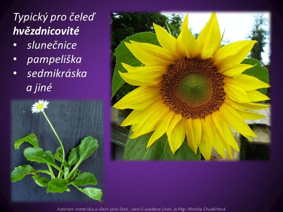 Typický pro čeleď hvězdnicovité slunečnice pampeliška sedmikráska a jiné Autorem materiálu a všech jeho částí, není-li uvedeno jinak, je Mgr. Monika C
