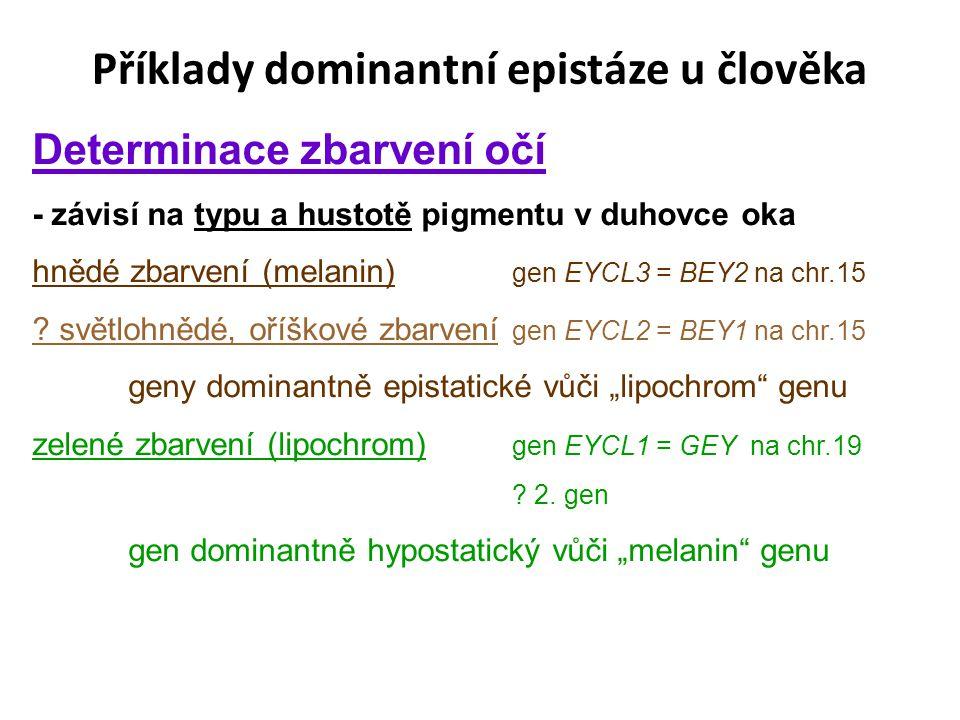 Příklady dominantní epistáze u člověka Determinace zbarvení očí - závisí na typu a hustotě pigmentu v duhovce oka hnědé zbarvení (melanin) gen EYCL3 = BEY2 na chr.15 .
