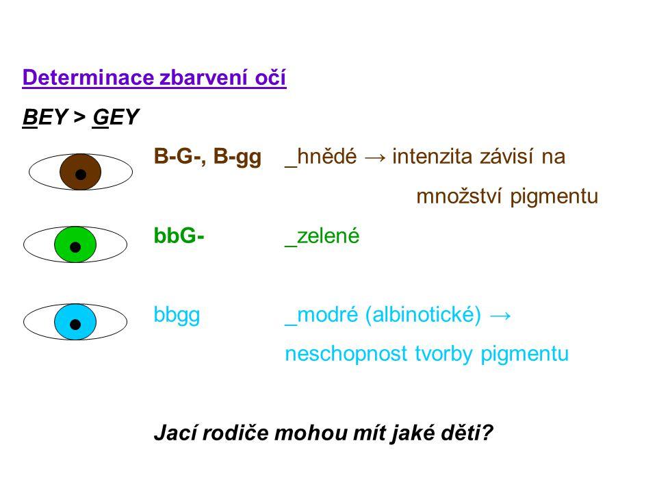 Determinace zbarvení očí BEY > GEY B-G-, B-gg_hnědé → intenzita závisí na množství pigmentu bbG- _zelené bbgg _modré (albinotické) → neschopnost tvorby pigmentu Jací rodiče mohou mít jaké děti?