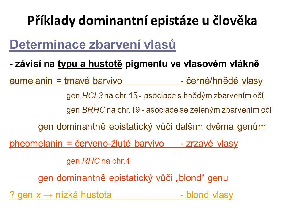 """Příklady dominantní epistáze u člověka Determinace zbarvení vlasů - závisí na typu a hustotě pigmentu ve vlasovém vlákně eumelanin = tmavé barvivo- černé/hnědé vlasy gen HCL3 na chr.15 - asociace s hnědým zbarvením očí gen BRHC na chr.19 - asociace se zeleným zbarvením očí gen dominantně epistatický vůči dalším dvěma genům pheomelanin = červeno-žluté barvivo- zrzavé vlasy gen RHC na chr.4 gen dominantně epistatický vůči """"blond genu ."""
