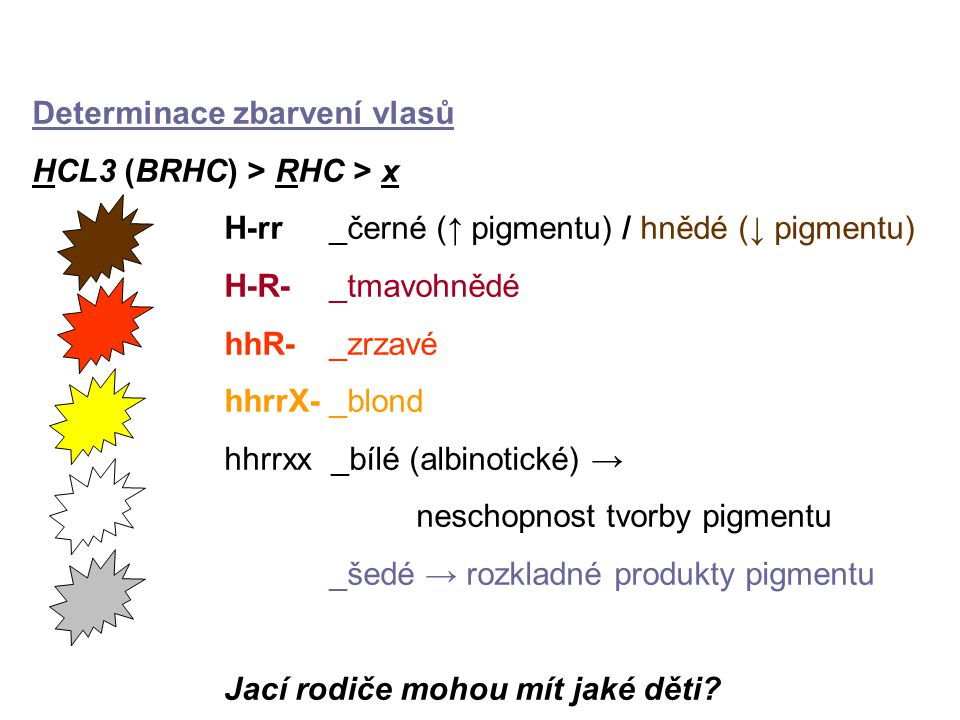Determinace zbarvení vlasů HCL3 (BRHC) > RHC > x H-rr _černé (↑ pigmentu) / hnědé (↓ pigmentu) H-R- _tmavohnědé hhR- _zrzavé hhrrX- _blond hhrrxx _bílé (albinotické) → neschopnost tvorby pigmentu _šedé → rozkladné produkty pigmentu Jací rodiče mohou mít jaké děti?