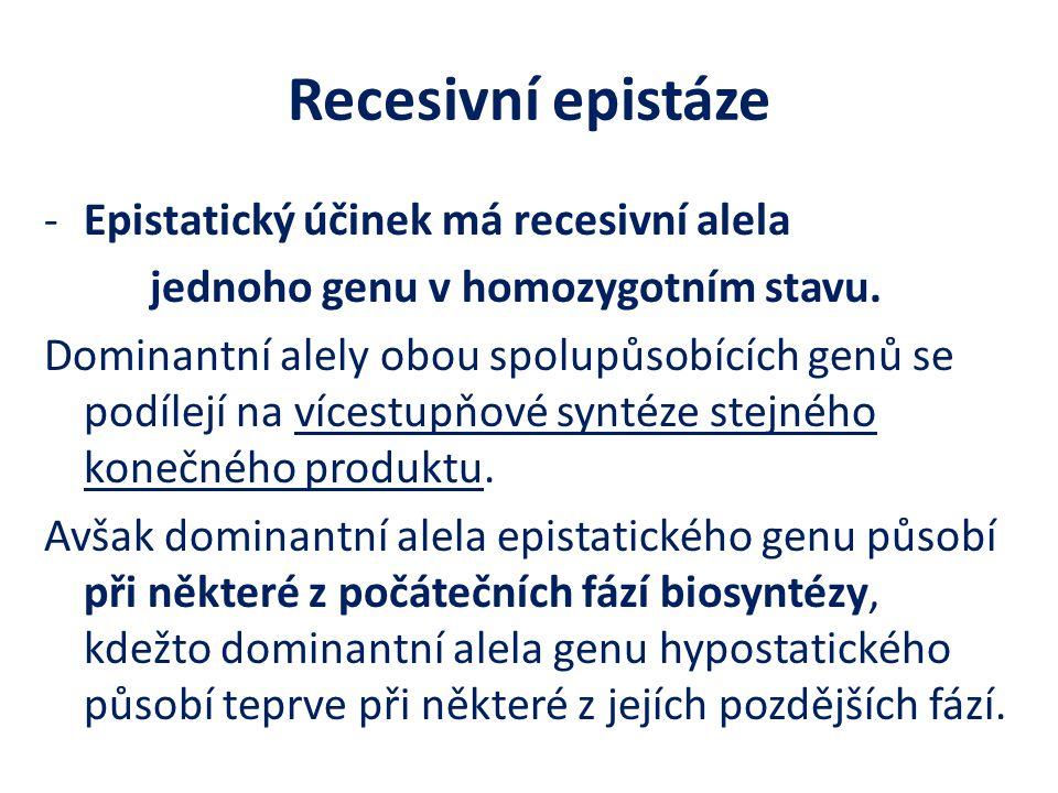 Recesivní epistáze -Epistatický účinek má recesivní alela jednoho genu v homozygotním stavu. Dominantní alely obou spolupůsobících genů se podílejí na
