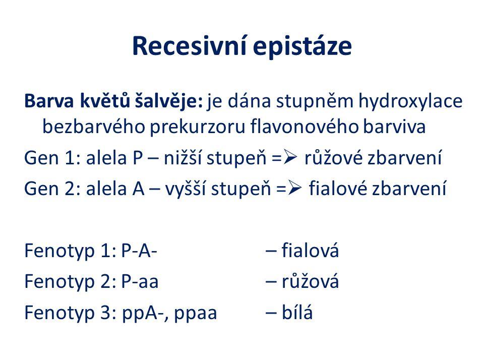 Recesivní epistáze Barva květů šalvěje: je dána stupněm hydroxylace bezbarvého prekurzoru flavonového barviva Gen 1: alela P – nižší stupeň =  růžové zbarvení Gen 2: alela A – vyšší stupeň =  fialové zbarvení Fenotyp 1:P-A- – fialová Fenotyp 2:P-aa – růžová Fenotyp 3: ppA-, ppaa – bílá