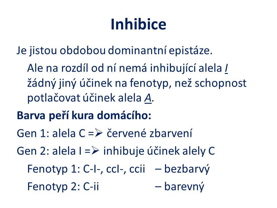 Inhibice Je jistou obdobou dominantní epistáze. Ale na rozdíl od ní nemá inhibující alela I žádný jiný účinek na fenotyp, než schopnost potlačovat úči
