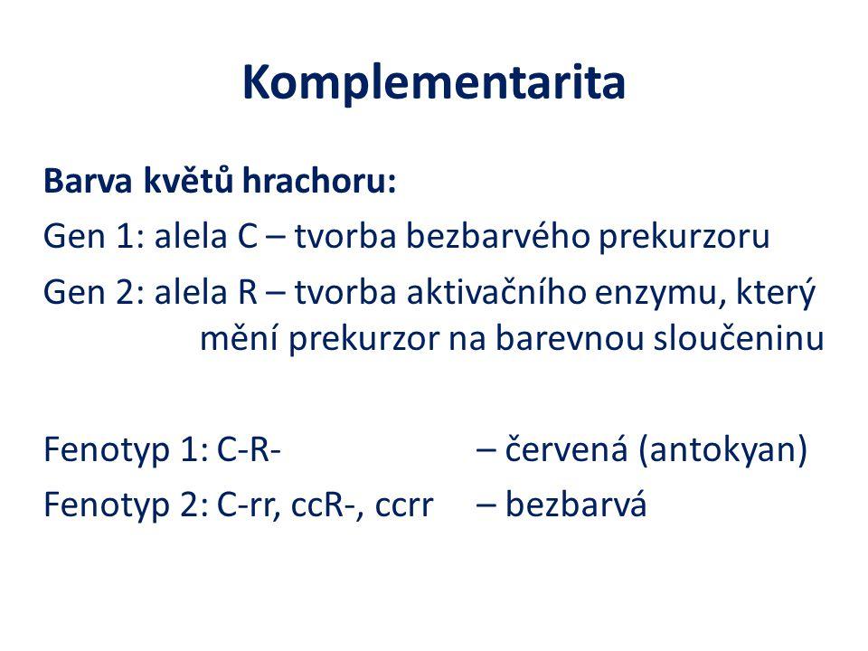 Komplementarita Barva květů hrachoru: Gen 1: alela C – tvorba bezbarvého prekurzoru Gen 2: alela R – tvorba aktivačního enzymu, který mění prekurzor na barevnou sloučeninu Fenotyp 1:C-R- – červená (antokyan) Fenotyp 2:C-rr, ccR-, ccrr – bezbarvá