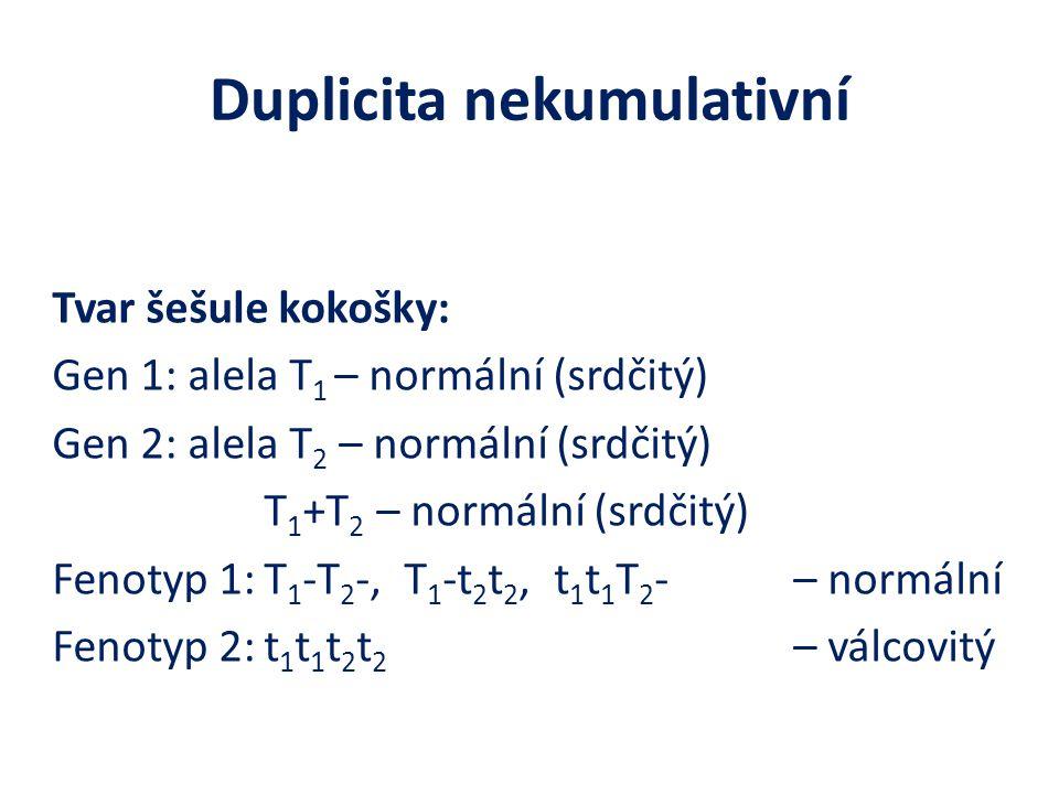 Duplicita nekumulativní Tvar šešule kokošky: Gen 1: alela T 1 – normální (srdčitý) Gen 2: alela T 2 – normální (srdčitý) T 1 +T 2 – normální (srdčitý) Fenotyp 1:T 1 -T 2 -, T 1 -t 2 t 2, t 1 t 1 T 2 -– normální Fenotyp 2:t 1 t 1 t 2 t 2 – válcovitý