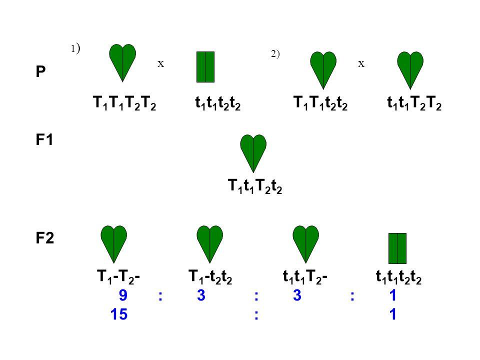 P 1)1) x 2) x F1 T 1 T 1 T 2 T 2 t 1 t 1 t 2 t 2 T 1 T 1 t 2 t 2 t 1 t 1 T 2 T 2 T 1 t 1 T 2 t 2 T 1 -T 2 - T 1 -t 2 t 2 t 1 t 1 T 2 -t 1 t 1 t 2 t 2 9 : 3 : 3 : 1 15 : 1 F2