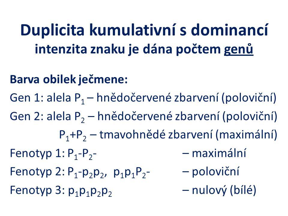Duplicita kumulativní s dominancí intenzita znaku je dána počtem genů Barva obilek ječmene: Gen 1: alela P 1 – hnědočervené zbarvení (poloviční) Gen 2: alela P 2 – hnědočervené zbarvení (poloviční) P 1 +P 2 – tmavohnědé zbarvení (maximální) Fenotyp 1:P 1 -P 2 -– maximální Fenotyp 2:P 1 -p 2 p 2, p 1 p 1 P 2 - – poloviční Fenotyp 3: p 1 p 1 p 2 p 2 – nulový (bílé)