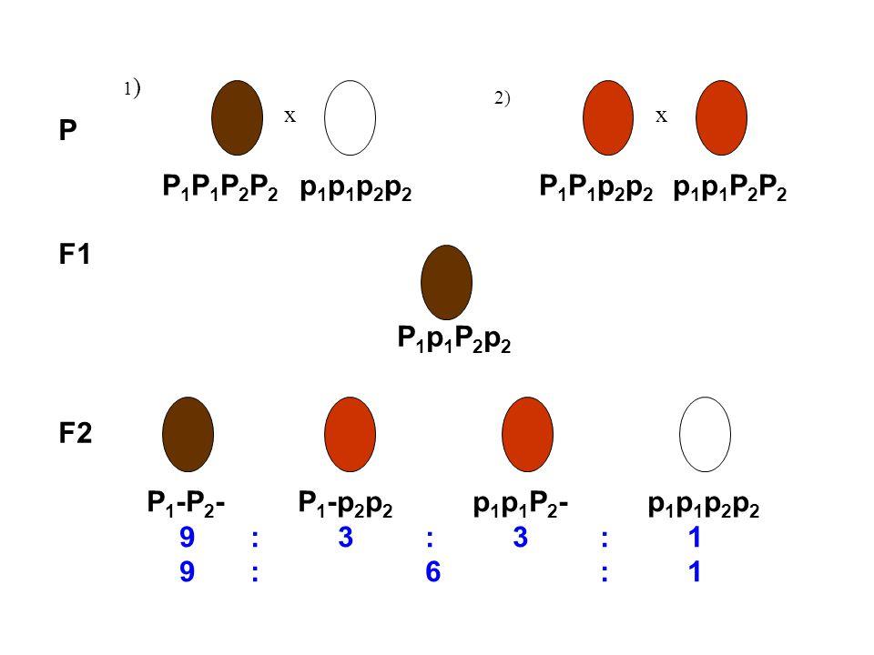 P 1)1) x 2) x F1 P 1 P 1 P 2 P 2 p 1 p 1 p 2 p 2 P 1 P 1 p 2 p 2 p 1 p 1 P 2 P 2 P 1 p 1 P 2 p 2 P 1 -P 2 -P 1 -p 2 p 2 p 1 p 1 P 2 -p 1 p 1 p 2 p 2 9 : 3 : 3 : 1 9 : 6 : 1 F2