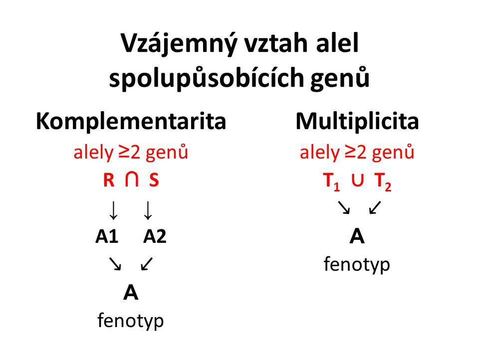 Vzájemný vztah alel spolupůsobících genů Komplementarita alely ≥ 2 genů R ∩ S ↓ A1 A2 ↘ ↙ A fenotyp Multiplicita alely ≥ 2 genů T 1 ∪ T 2 ↘ ↙ A fenotyp