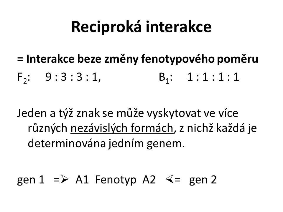 Reciproká interakce = Interakce beze změny fenotypového poměru F 2 : 9 : 3 : 3 : 1,B 1 : 1 : 1 : 1 : 1 Jeden a týž znak se může vyskytovat ve více různých nezávislých formách, z nichž každá je determinována jedním genem.