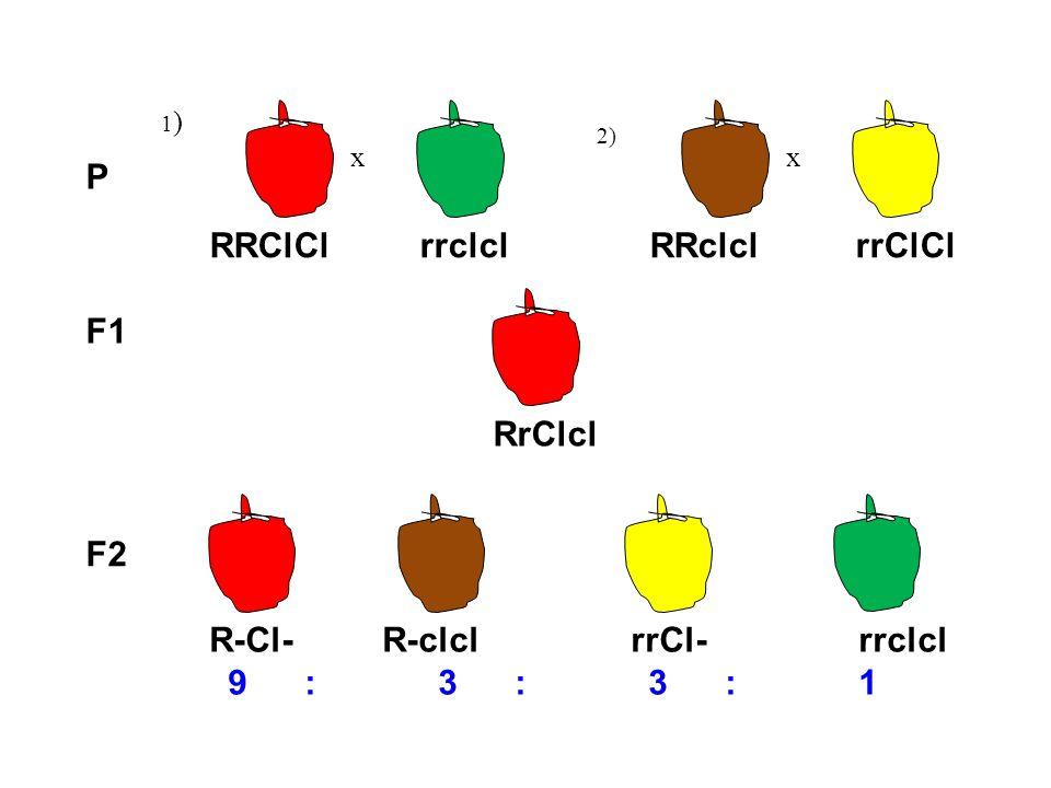 P 1)1) x 2) x F1 RRClCl rrclcl RRclcl rrClCl RrClcl R-Cl- R-clcl rrCl- rrclcl 9: 3: 3: 1 F2
