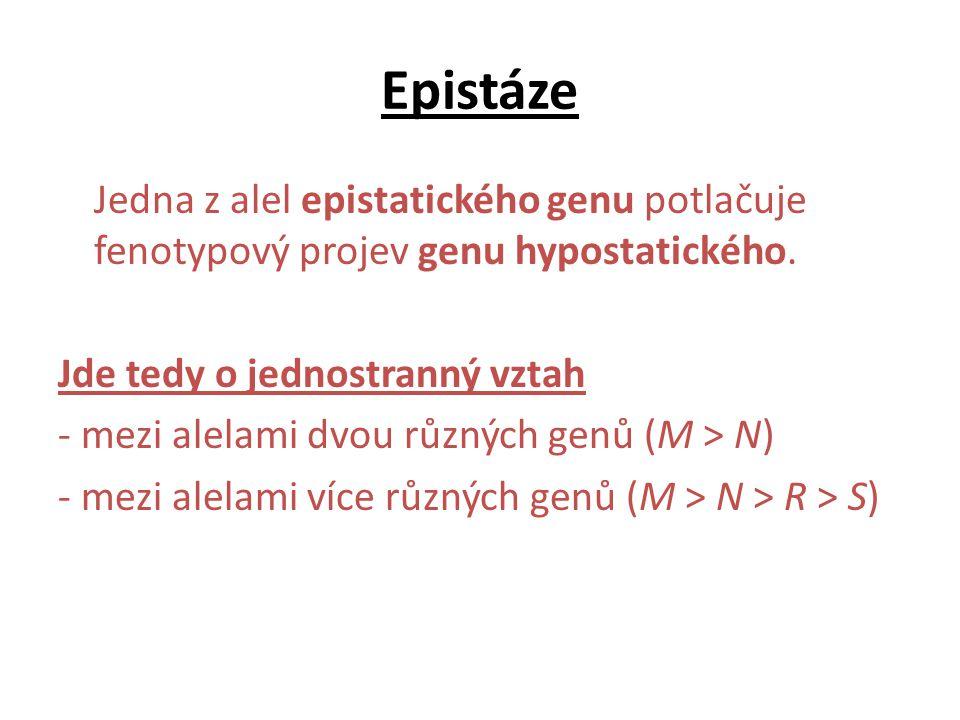Epistáze Jedna z alel epistatického genu potlačuje fenotypový projev genu hypostatického. Jde tedy o jednostranný vztah - mezi alelami dvou různých ge