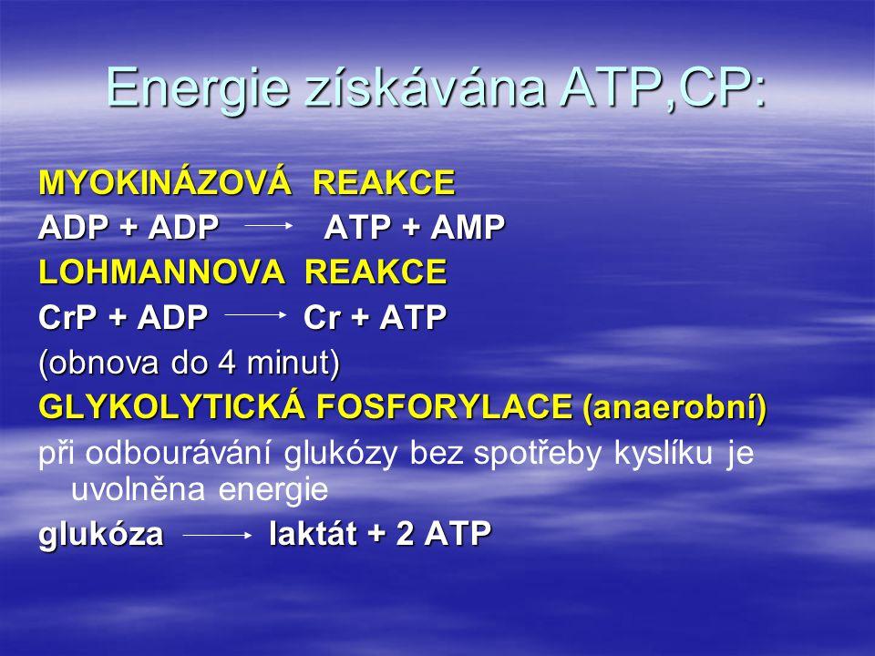 Energie získávána ATP,CP: MYOKINÁZOVÁ REAKCE ADP + ADP ATP + AMP LOHMANNOVA REAKCE CrP + ADP Cr + ATP (obnova do 4 minut) GLYKOLYTICKÁ FOSFORYLACE (an