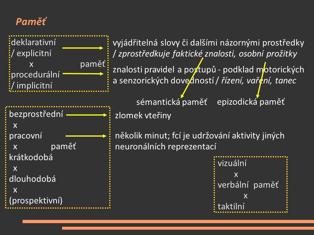 Paměť deklarativní / explicitní xpaměť procedurální / implicitní vyjádřitelná slovy či dalšími názornými prostředky / zprostředkuje faktické znalosti,