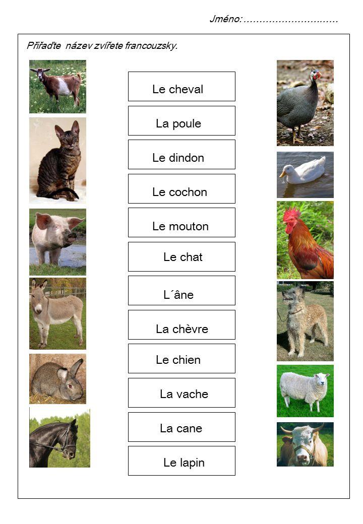 Přiřaďte název zvířete francouzsky.