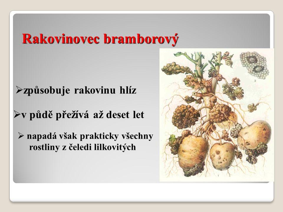 Rakovinovec bramborový  způsobuje rakovinu hlíz  v půdě přežívá až deset let  napadá však prakticky všechny rostliny z čeledi lilkovitých