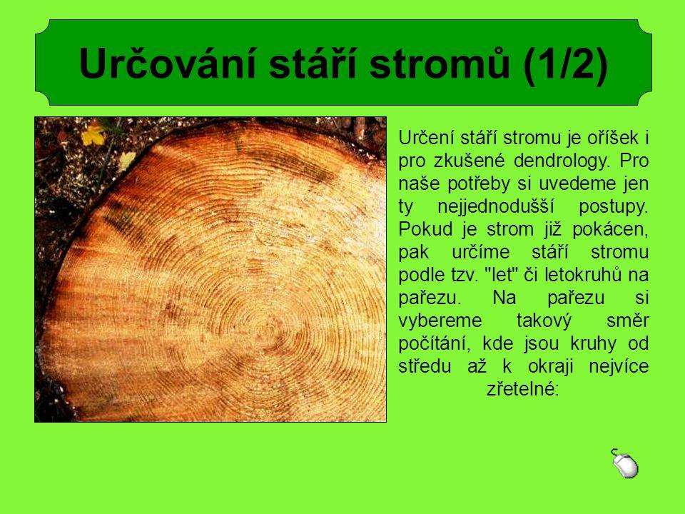 Určování stáří stromů (1/2) Určení stáří stromu je oříšek i pro zkušené dendrology. Pro naše potřeby si uvedeme jen ty nejjednodušší postupy. Pokud je