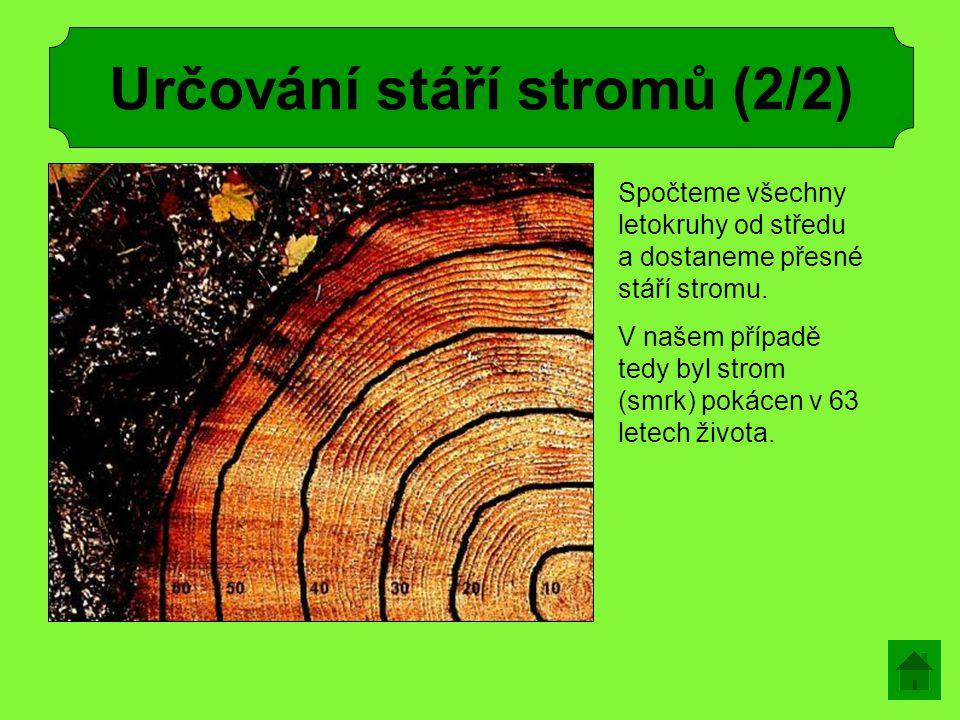 Určování stáří stromů (2/2) Spočteme všechny letokruhy od středu a dostaneme přesné stáří stromu. V našem případě tedy byl strom (smrk) pokácen v 63 l