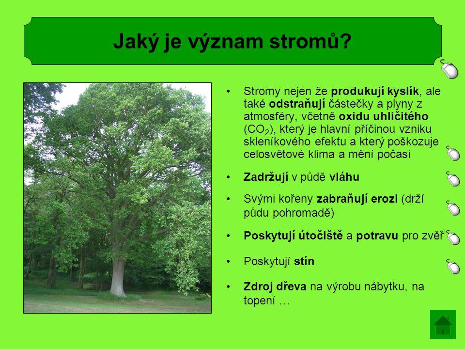 Stromy nejen že produkují kyslík, ale také odstraňují částečky a plyny z atmosféry, včetně oxidu uhličitého (CO 2 ), který je hlavní příčinou vzniku skleníkového efektu a který poškozuje celosvětové klima a mění počasí Jaký je význam stromů.
