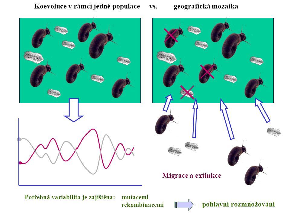 Koevoluce v rámci jedné populace vs. geografická mozaika Migrace a extinkce Potřebná variabilita je zajištěna: mutacemi rekombinacemi pohlavní rozmnož
