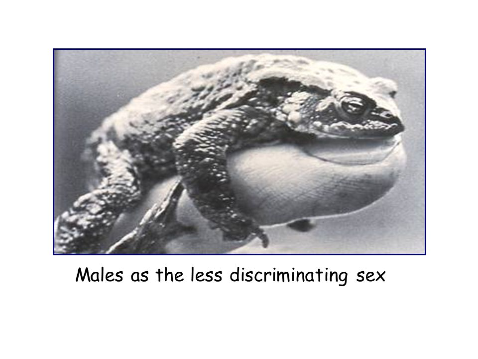 Males as the less discriminating sex