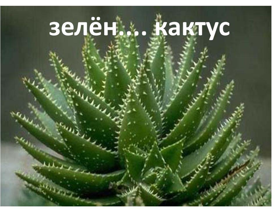 зелён.... кактус