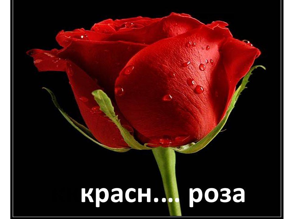 кккрасн.… роза