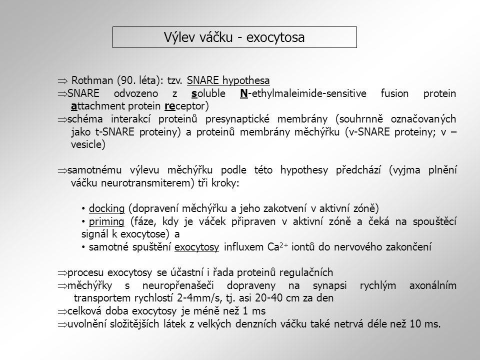  Rothman (90.léta): tzv.