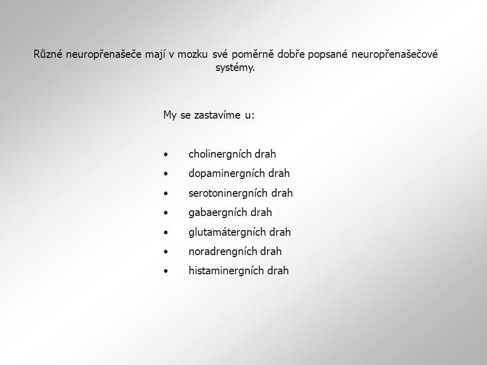 My se zastavíme u: cholinergních drah dopaminergních drah serotoninergních drah gabaergních drah glutamátergních drah noradrengních drah histaminergních drah Různé neuropřenašeče mají v mozku své poměrně dobře popsané neuropřenašečové systémy.