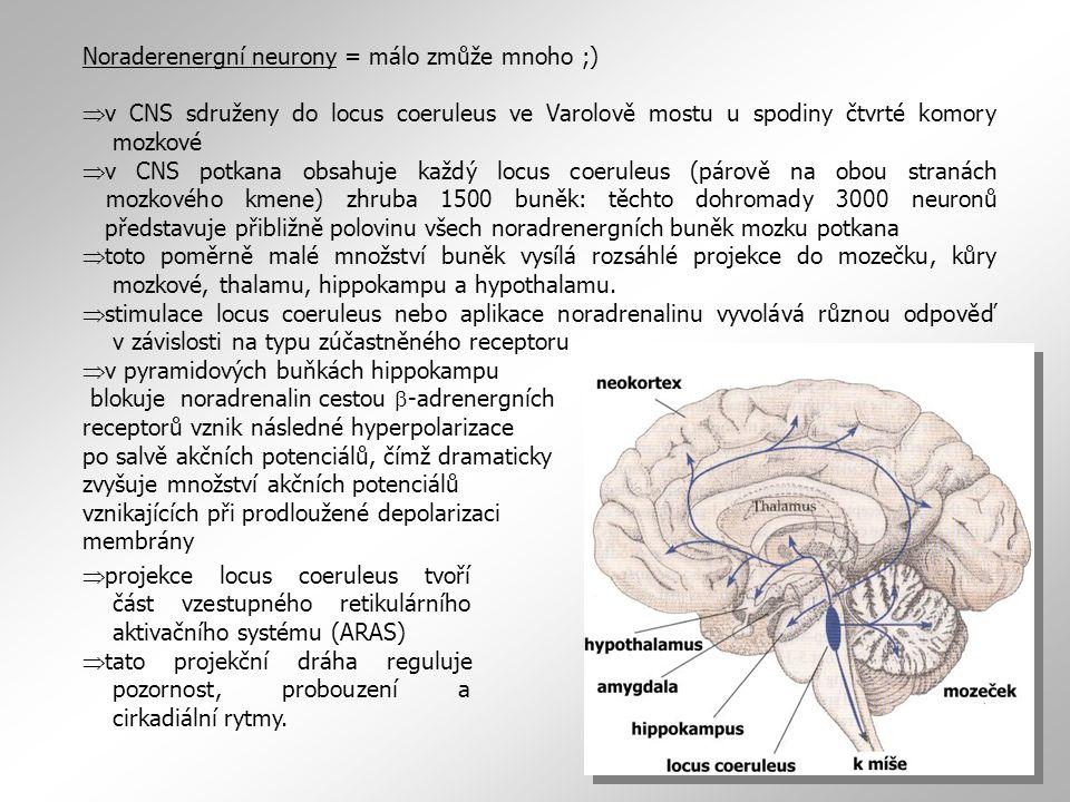 Noraderenergní neurony = málo zmůže mnoho ;)  v CNS sdruženy do locus coeruleus ve Varolově mostu u spodiny čtvrté komory mozkové  v CNS potkana obsahuje každý locus coeruleus (párově na obou stranách mozkového kmene) zhruba 1500 buněk: těchto dohromady 3000 neuronů představuje přibližně polovinu všech noradrenergních buněk mozku potkana  toto poměrně malé množství buněk vysílá rozsáhlé projekce do mozečku, kůry mozkové, thalamu, hippokampu a hypothalamu.