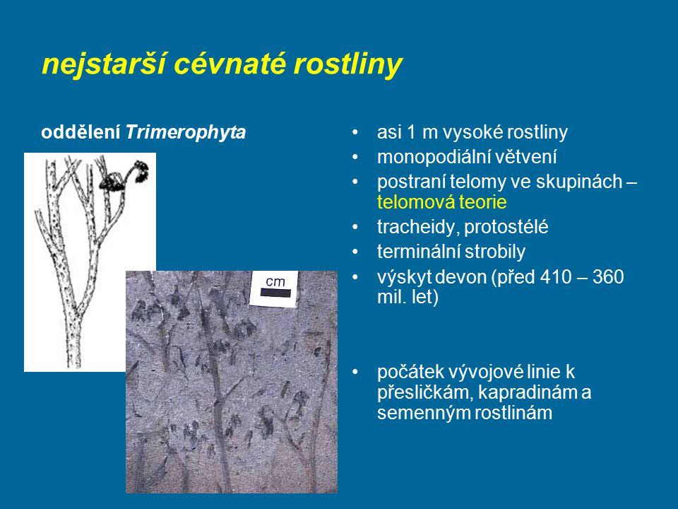 nejstarší cévnaté rostliny oddělení Trimerophytaasi 1 m vysoké rostliny monopodiální větvení postraní telomy ve skupinách – telomová teorie tracheidy,