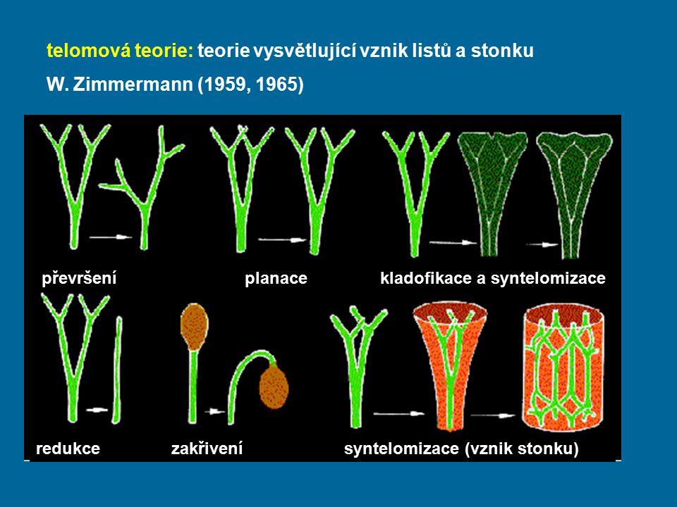 telomová teorie: teorie vysvětlující vznik listů a stonku W. Zimmermann (1959, 1965) převršeníplanacekladofikace a syntelomizace redukcezakřivení synt
