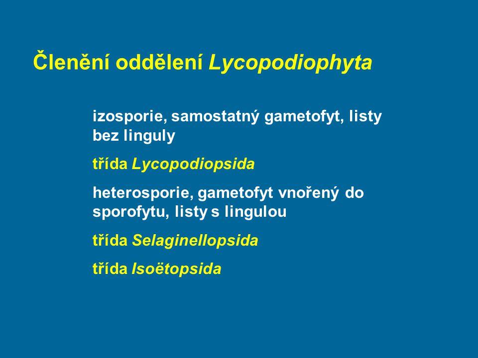 Členění oddělení Lycopodiophyta izosporie, samostatný gametofyt, listy bez linguly třída Lycopodiopsida heterosporie, gametofyt vnořený do sporofytu,