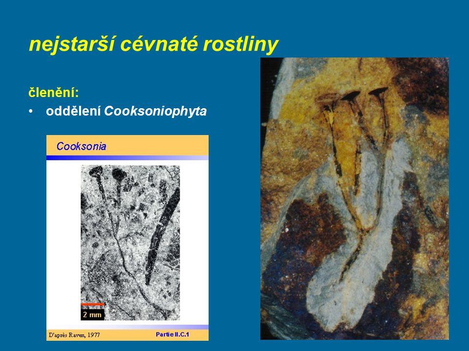 nejstarší cévnaté rostliny členění: oddělení Cooksoniophyta