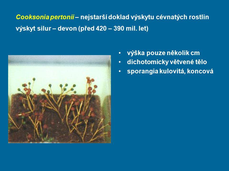 Cooksonia pertonii – nejstarší doklad výskytu cévnatých rostlin výskyt silur – devon (před 420 – 390 mil. let) výška pouze několik cm dichotomicky vět