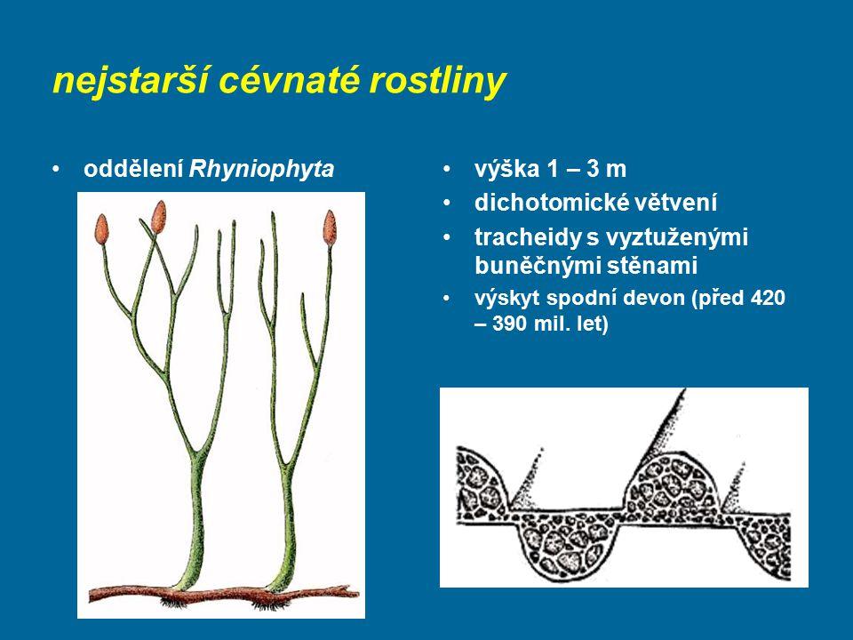 nejstarší cévnaté rostliny oddělení Rhyniophytavýška 1 – 3 m dichotomické větvení tracheidy s vyztuženými buněčnými stěnami výskyt spodní devon (před
