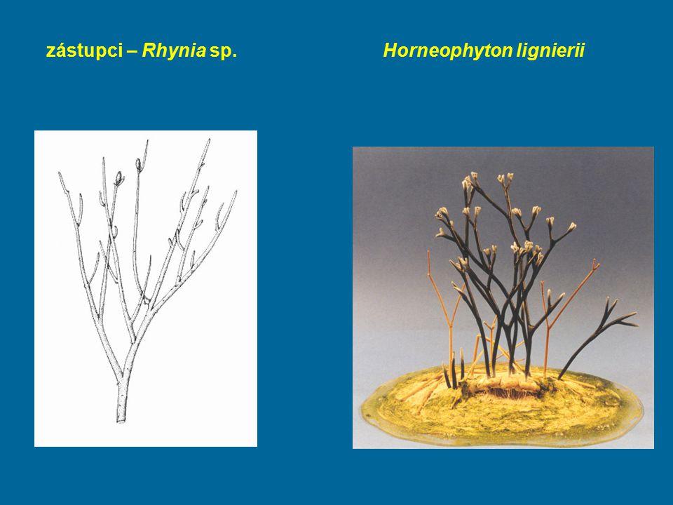 zástupci – Rhynia sp.Horneophyton lignierii