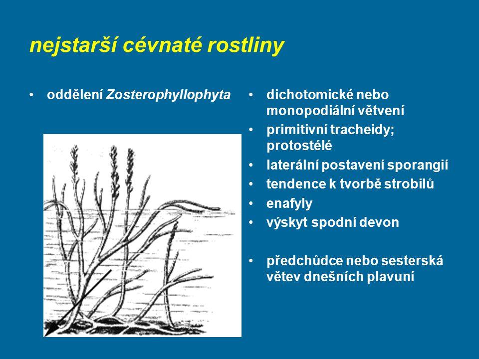 nejstarší cévnaté rostliny oddělení Zosterophyllophytadichotomické nebo monopodiální větvení primitivní tracheidy; protostélé laterální postavení spor