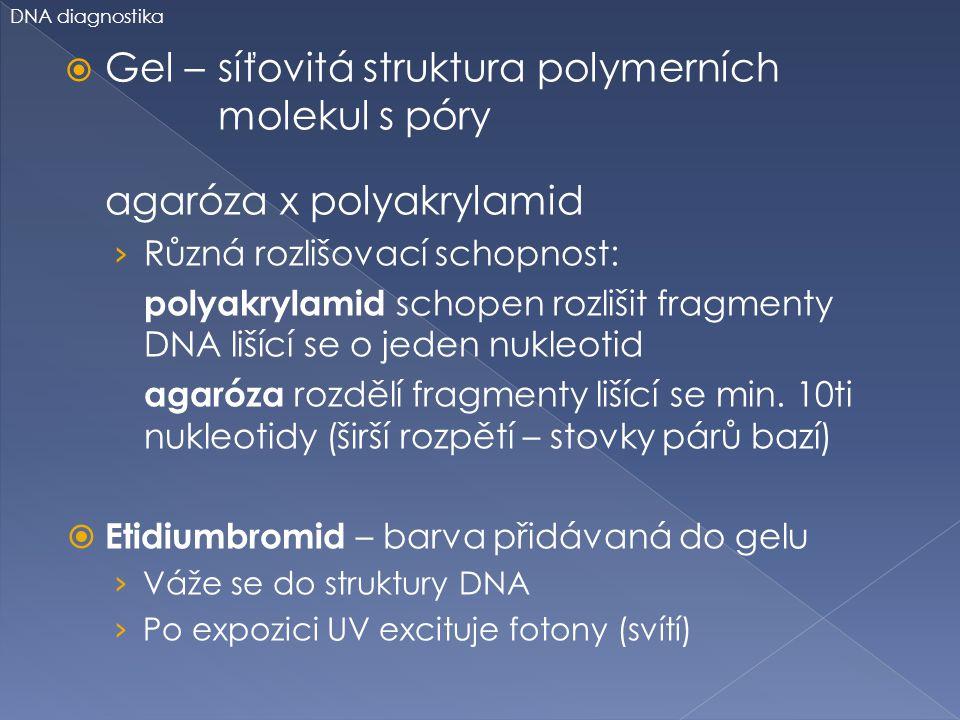  Gel – síťovitá struktura polymerních molekul s póry agaróza x polyakrylamid › Různá rozlišovací schopnost: polyakrylamid schopen rozlišit fragmenty