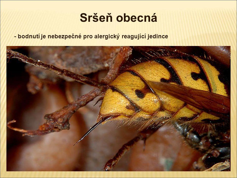 Vosa obecná - žihadlo nemá zpětné háčky - kolonie až 2000 jedinců - přezimuje oplodněná královna - živí se nektarem, larvy jsou dravé černožluté pruhování
