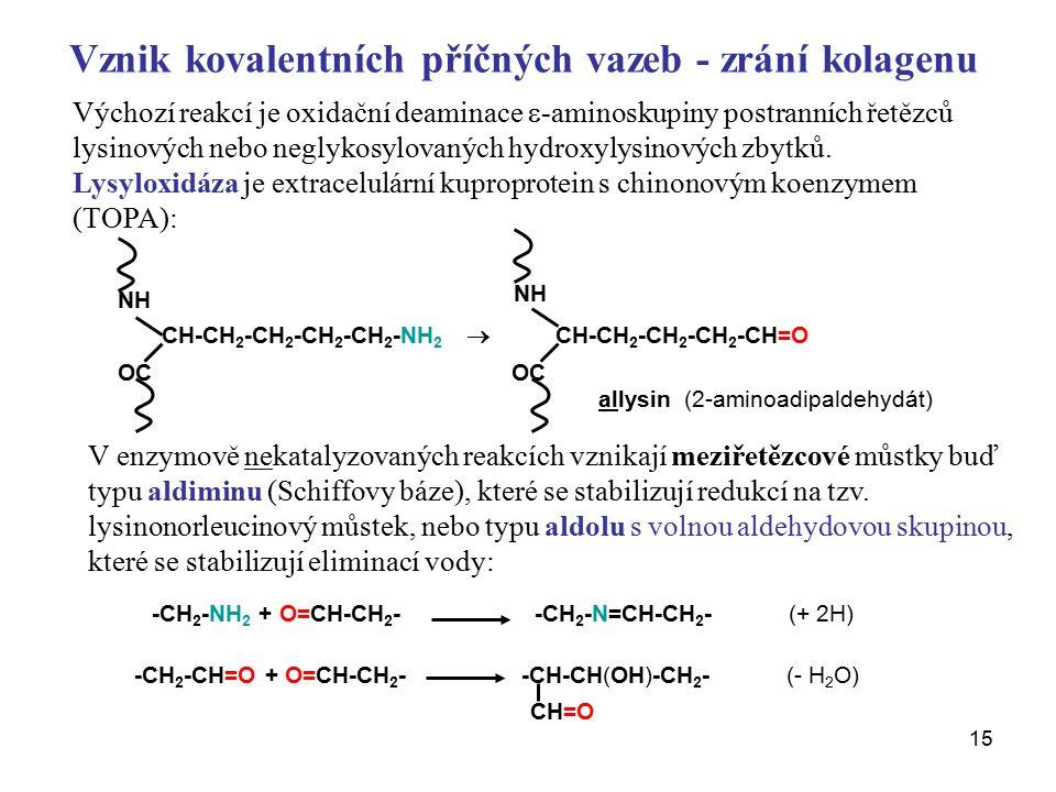 15 Vznik kovalentních příčných vazeb - zrání kolagenu Výchozí reakcí je oxidační deaminace  -aminoskupiny postranních řetězců lysinových nebo neglykosylovaných hydroxylysinových zbytků.