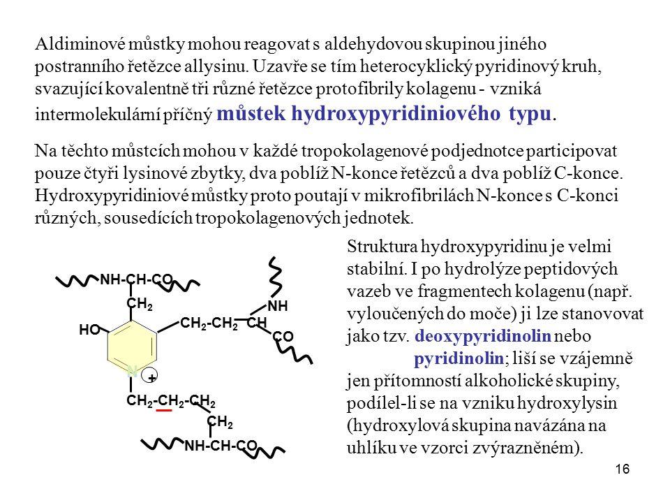 16 Aldiminové můstky mohou reagovat s aldehydovou skupinou jiného postranního řetězce allysinu. Uzavře se tím heterocyklický pyridinový kruh, svazujíc