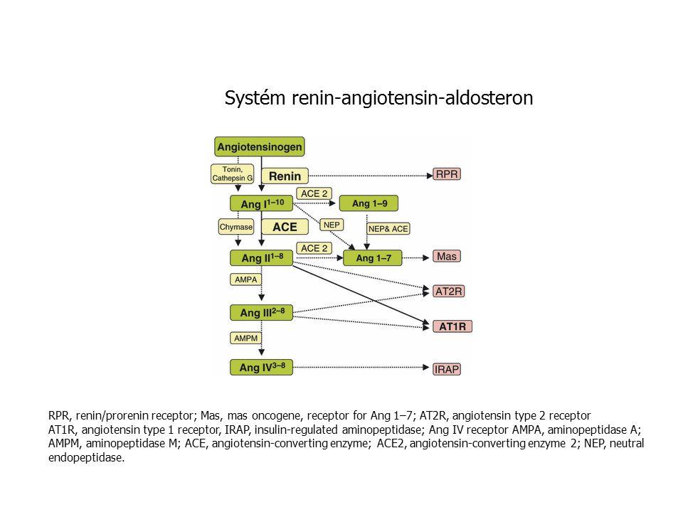 Systém renin-angiotensin-aldosteron RPR, renin/prorenin receptor; Mas, mas oncogene, receptor for Ang 1–7; AT2R, angiotensin type 2 receptor AT1R, angiotensin type 1 receptor, IRAP, insulin-regulated aminopeptidase; Ang IV receptor AMPA, aminopeptidase A; AMPM, aminopeptidase M; ACE, angiotensin-converting enzyme; ACE2, angiotensin-converting enzyme 2; NEP, neutral endopeptidase.