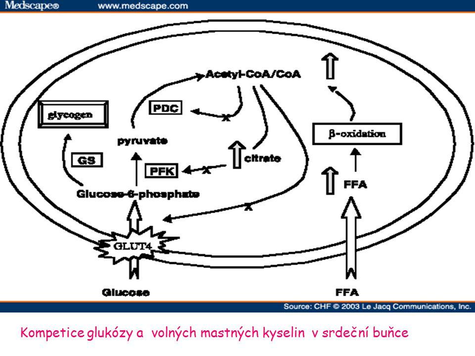 Kompetice glukózy a volných mastných kyselin v srdeční buňce