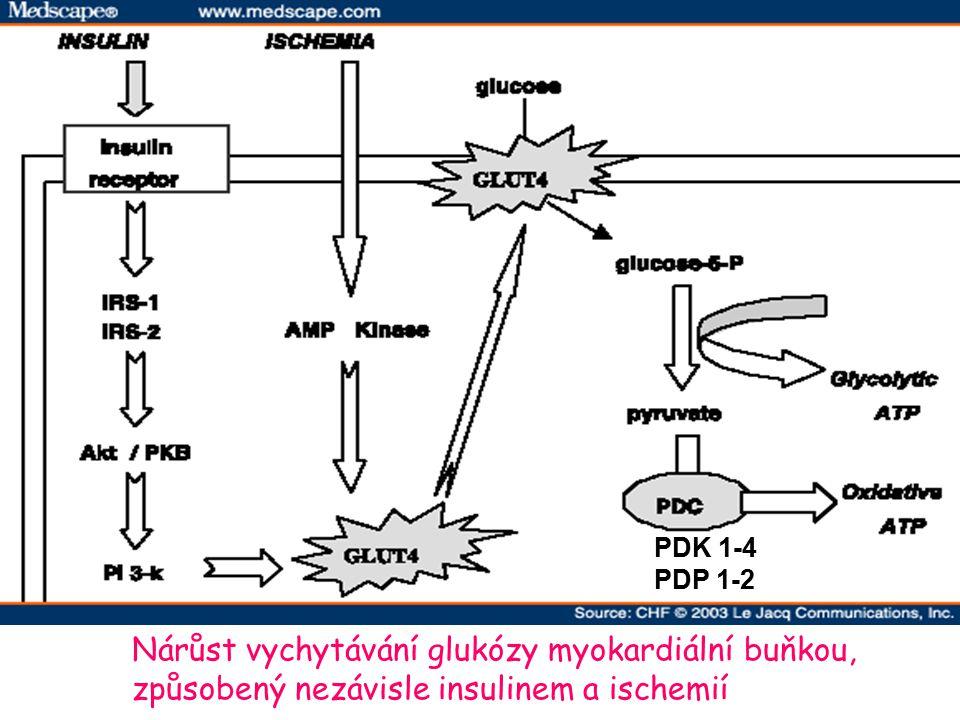 Nárůst vychytávání glukózy myokardiální buňkou, způsobený nezávisle insulinem a ischemií PDK 1-4 PDP 1-2