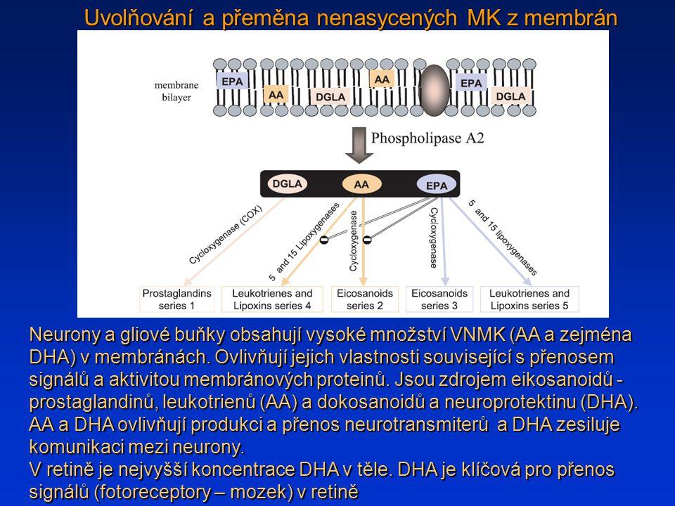 Uvolňování a přeměna nenasycených MK z membrán Neurony a gliové buňky obsahují vysoké množství VNMK (AA a zejména DHA) v membránách.