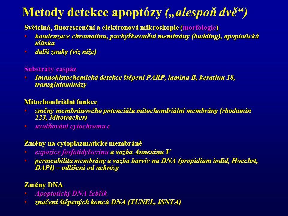 """Metody detekce apoptózy (""""alespoň dvě ) Světelná, fluorescenční a elektronová mikroskopie (morfologie) kondenzace chromatinu, puchýřkovatění membrány (budding), apoptotická tělískakondenzace chromatinu, puchýřkovatění membrány (budding), apoptotická tělíska další znaky (viz níže)další znaky (viz níže) Substráty caspáz Imunohistochemická detekce štěpení PARP, laminu B, keratinu 18, transglutaminázyImunohistochemická detekce štěpení PARP, laminu B, keratinu 18, transglutaminázy Mitochondriální funkce změny membránového potenciálu mitochondriální membrány (rhodamin 123, Mitotracker)změny membránového potenciálu mitochondriální membrány (rhodamin 123, Mitotracker) uvolňování cytochromu cuvolňování cytochromu c Změny na cytoplazmatické membráně expozice fosfatidylserinu a vazba Annexinu Vexpozice fosfatidylserinu a vazba Annexinu V permeabilita membrány a vazba barviv na DNA (propidium iodid, Hoechst, DAPI) – odlišení od nekrózypermeabilita membrány a vazba barviv na DNA (propidium iodid, Hoechst, DAPI) – odlišení od nekrózy Změny DNA Apoptotický DNA žebříkApoptotický DNA žebřík značení štěpených konců DNA (TUNEL, ISNTA)značení štěpených konců DNA (TUNEL, ISNTA)"""