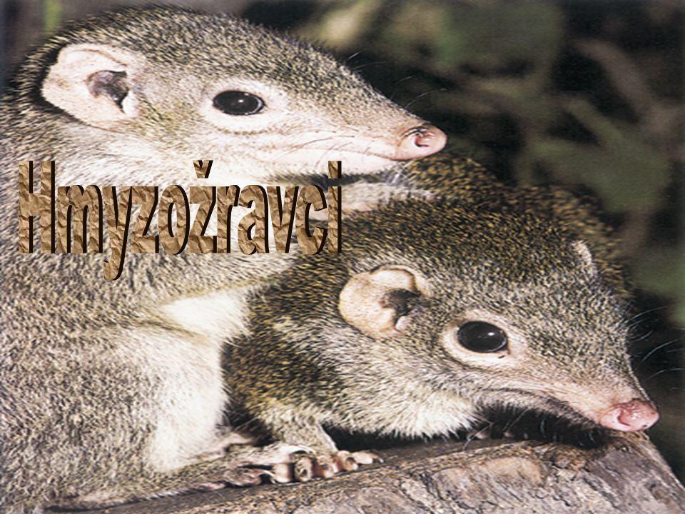  Řád  Hmyzožravci (Eulipotyphla)  Čeledi  Ježkovití (Erinaceidae)  Rejskovití (Soricidae)  Krtkovití (Talpidae)